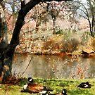 Geese Under Flowering Tree Closeup by Susan Savad