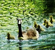 Goose Family by Susan Savad
