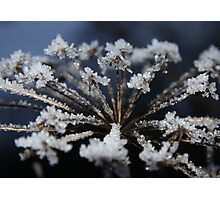 The Wonder of nature - ice crystals Photographic Print
