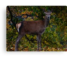 Red Doe Canvas Print