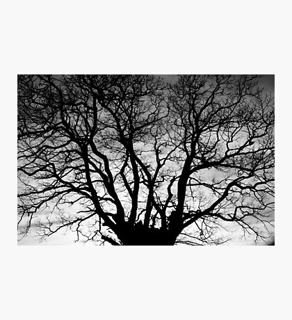 Tree Silhouette #4 Photographic Print