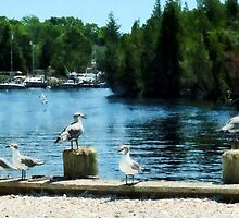 Seagulls Sitting on Dock by Susan Savad