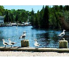 Seagulls Sitting on Dock Photographic Print