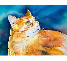 MARMALADE CAT Photographic Print