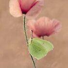 Pastel poppies by JBlaminsky