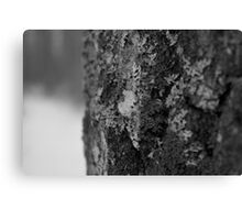 Macro Winter Tree in Black & White Canvas Print