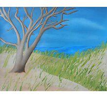 Tree of Solitude Photographic Print