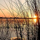 Sunset Through the Reeds by Marylou Badeaux