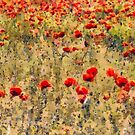 Poppies by heidiannemorris