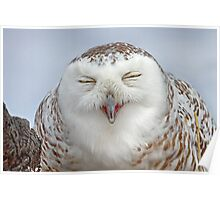 Smiling Snowy Owl Poster