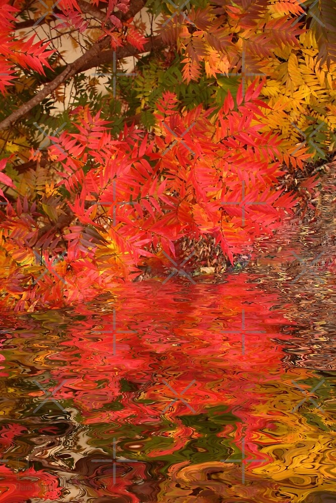 Leaf Reflections by Elaine Teague
