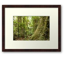 Rainforest - Mt Tamborine, Q. Australia.  Framed Print