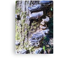 Redwood Forest Mushrooms Canvas Print