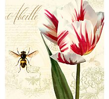 Natural History Sketchbook I Botanical study bumble bee, tulip Photographic Print