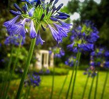 Agapanthus in the Garden by BelindaGreb