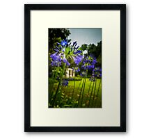 Agapanthus in the Garden Framed Print