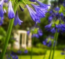 Agapanthus in the Garden Sticker