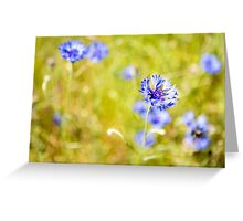 Bachelor Buttons Glowing Greeting Card