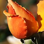 Orange Rose Bud by Joy Watson