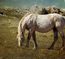 Cloud - Pryor Mustang by BelindaGreb
