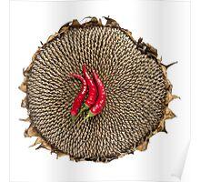 Chili & sunflower Poster