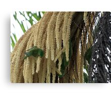 Wild Green White-Spotted Parrots Feeding Canvas Print