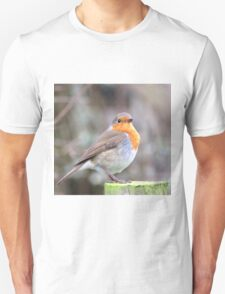 Robin Sitting On Wooded Post T-Shirt