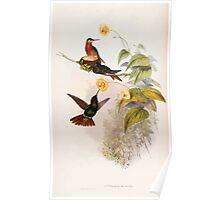 A monograph of the Trochilidæ or family of humming birds by John Gould 1861 V4 194 Poster