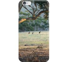 Kangaroos in the Field - Kangaroo Island  iPhone Case/Skin