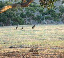 Kangaroos in the Field - Kangaroo Island  Sticker