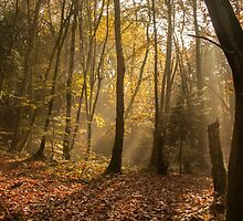 Autumn Mist by tomhard