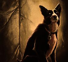 border collie by jemstoned