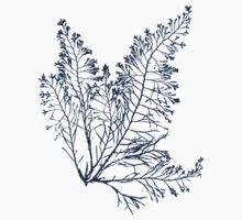Ocean Botanical Seaweed Baby Tee