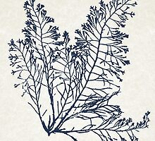 Ocean Botanical Seaweed by Christina Rollo