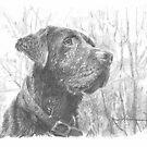 chocolate lab in woods drawing by Mike Theuer