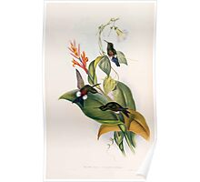 A monograph of the Trochilidæ or family of humming birds by John Gould 1861 V4 278 Poster