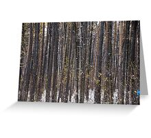 The Pine forest Greeting Card