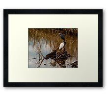Waterfowl Framed Print