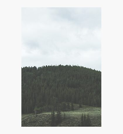 Simplistic Green Forest Photographic Print