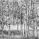 Wasatch Mountains Forest, Utah by cshphotos