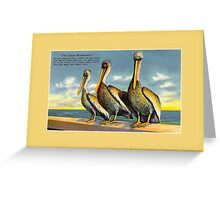 Three Musketeers pelicans from Florida vintage Greeting Card