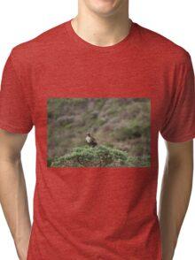 Cooper's Hawk Tri-blend T-Shirt
