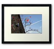 Red Berries and Contrail Framed Print