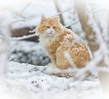 Snow Cat by MotherNature2