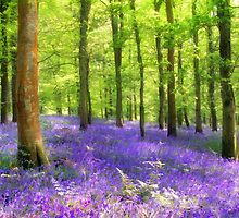 Among the bluebells by Lyn Evans