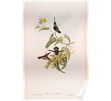 A monograph of the Trochilidæ or family of humming birds by John Gould 1861 V4 034 Poster