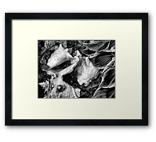 Three Shells Framed Print