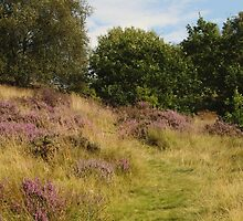 Purple Heather and Grassy Path by Adrian Wale