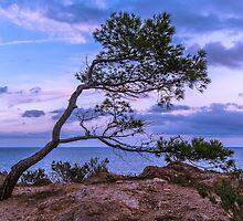 Tree by dariobrozzi