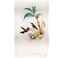 A monograph of the Trochilidæ or family of humming birds by John Gould 1861 V4 198 Poster